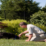 Tips for Eliminating Weeds in Your Lawn